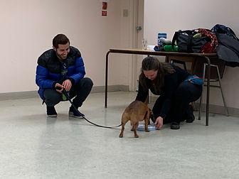 Dog Training Workshops Seminars Events