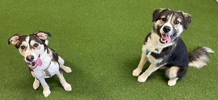 Dog Training Mississauga Oakville