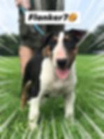 Puppy Training Toronto Canie Rehabilitat
