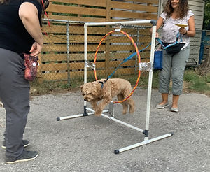 Agility%20Dog%20Training%20Mississauga_e