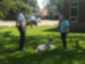 Private Dog Training Mississauga Oakvill