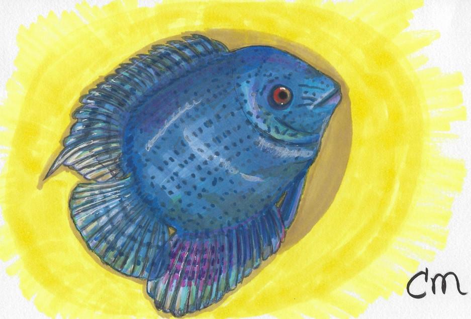 Pretty-Fish-5-6-2018.jpg