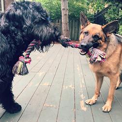 Mississauga Snappy To Happy Dog Training