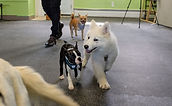 Dog Training Mississauga Puppy Trainer Classes