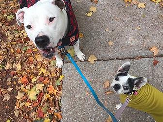 Mississauga Dog Training Pawsitive Plus