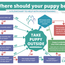 Where should your puppy be?