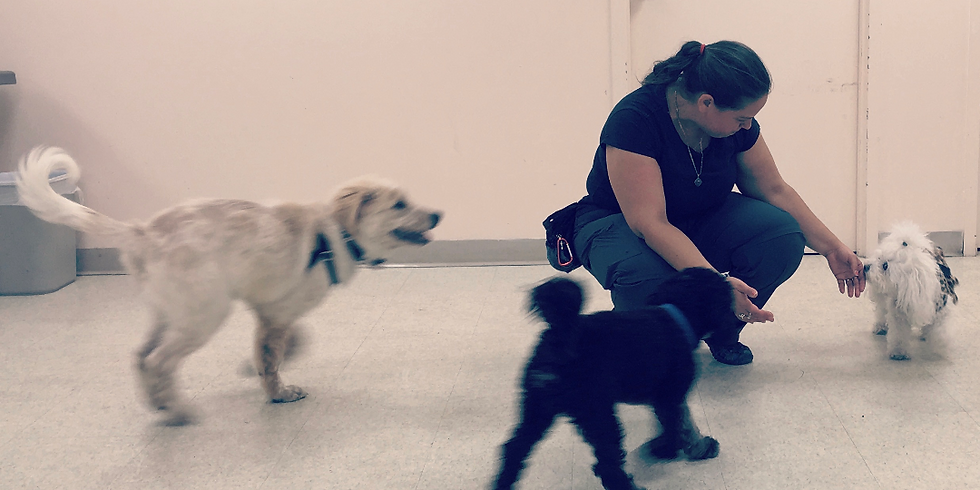 Puppy (2-6 mo) Drop-Off Socialization Hour ($25)