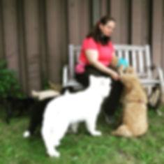 Puppy Training mississauga.JPG