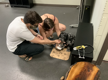 Dog Grooming Training