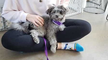 Puppy Trainer Mississauga Oakville Burli