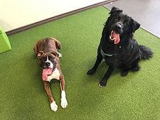 Puppy Socialization Training