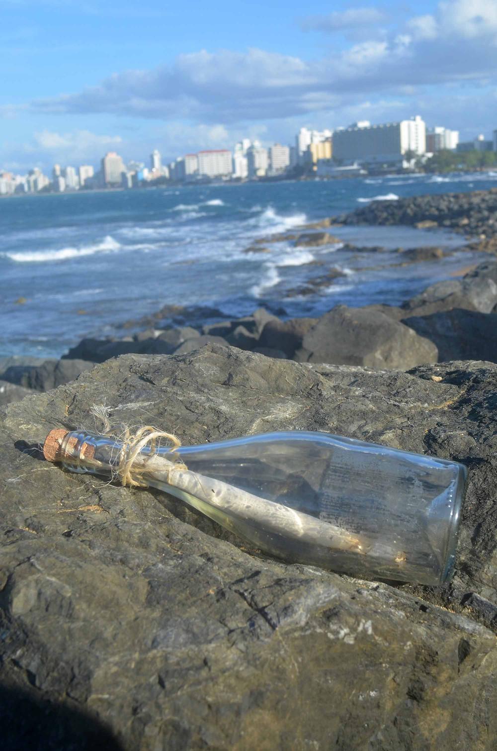 Puerto Rico Engagement___0002.jpg