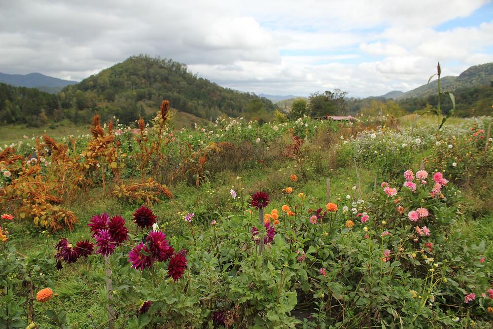 Lady Luck Flower Farm in Asheville, NC.