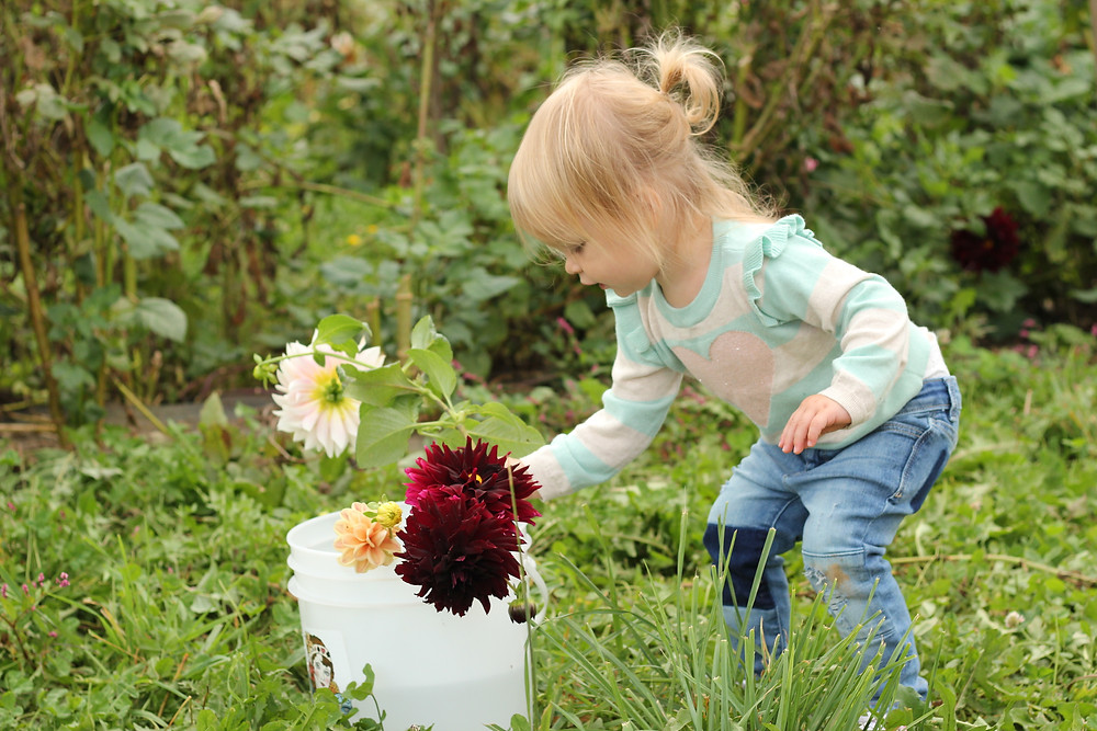 A little girl puts a flower in a bucket at Lady Luck Flower Farm in Asheville, NC.