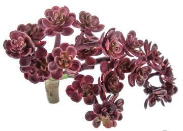 Purple Mini Succulent Pick