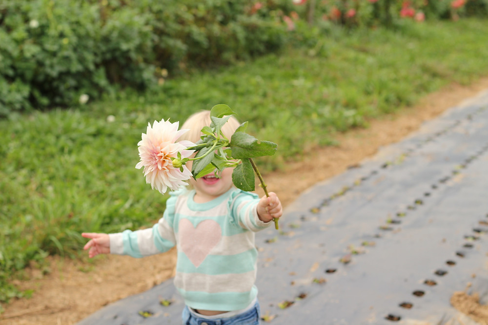 A little girl runs with a large flower at Lady Luck Flower Farm in Asheville, NC.