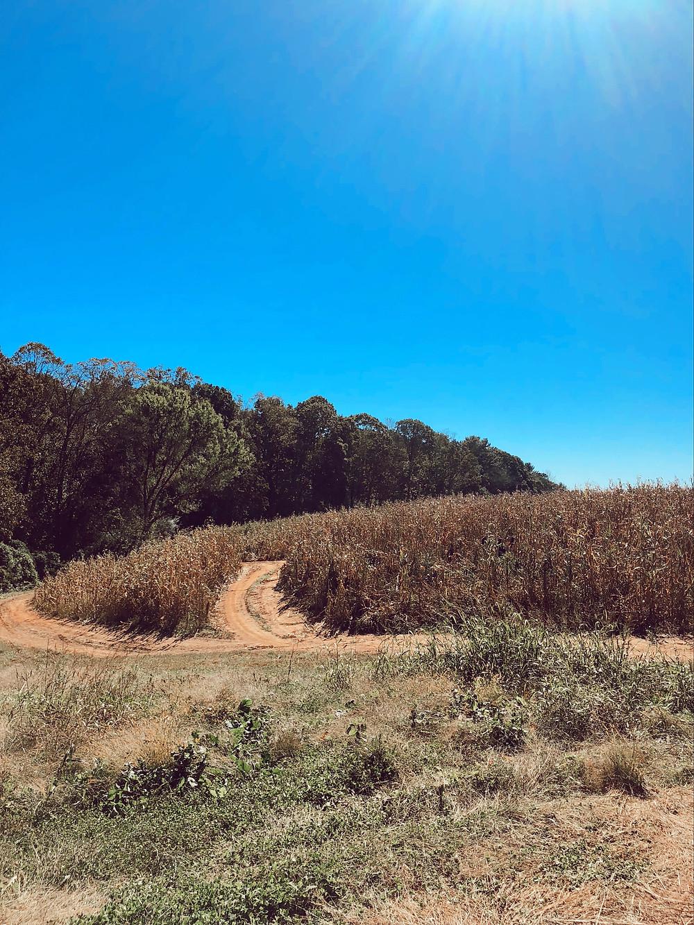 Eliada Home Corn Maze Asheville