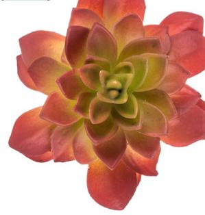 Pink Succulent Pick