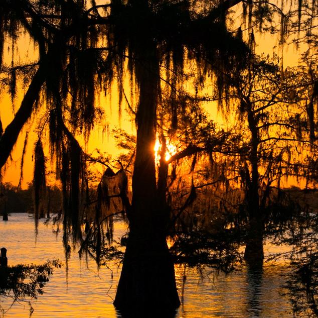 Swamp_Sunrise2.jpg