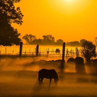 Pony_sunrise.jpg