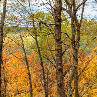 Arkansas_Leaves.jpg