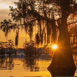 Swamp_Sunrise.jpg