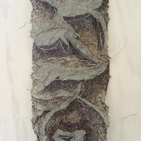 banksia variation i
