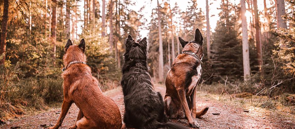Eine Hundeschule - zwei Standorte!
