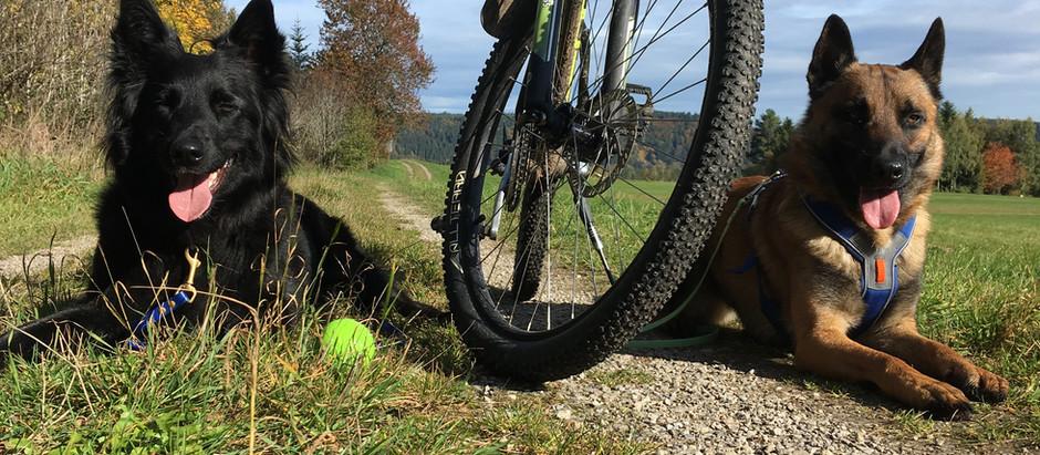 Radfahren als Bewegungsauslastung lauffreudiger Hunde