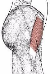 股関節痛に関係する筋肉③大腿筋膜張筋