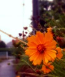 多摩センター多摩市の整体院からだやの雨の写真