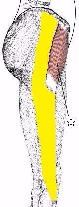 多摩市多摩センターの整体院からだやの腸脛靭帯図