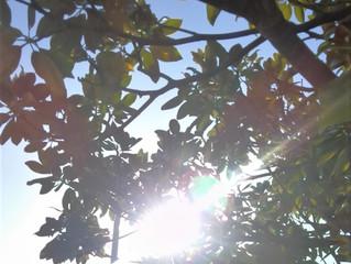 やっと太陽が