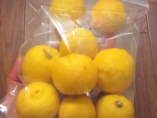 たくさんの柚子を頂きました