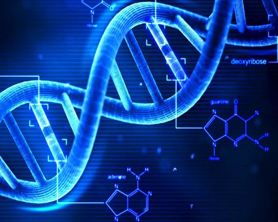 多摩市多摩センターの整体院身体均整堂からだやの遺伝子