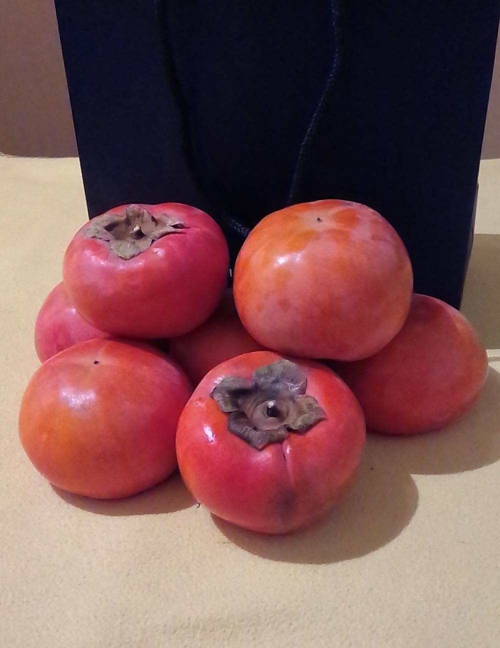 多摩市多摩センターの整体院からだやの柿