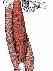 膝痛に関係する筋肉①大腿四頭筋