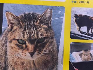 猫を探しています
