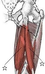 腰痛に関係する筋肉③ハムストリングス