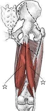 腰痛と肩こりに強く、多摩市多摩センターの整体の中でのばしてほぐす整体を使う多摩センター駅から8分の整体院身体均整堂からだやのハムストリングスの図