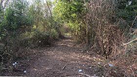 Corredor Ecologico antes 2.jpg