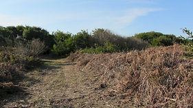 Corredor Ecologico antes 3.jpg