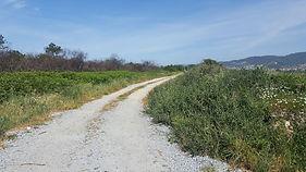 Corredor Ecologico antes 1.jpg