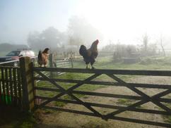Owena's Farm Therapies