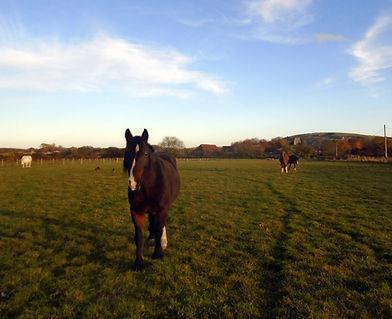Owen's Farm Therapies - Horses