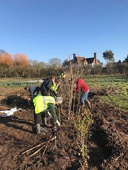 Hedge planting Sidlesham with The Community Conservation Partnership (CCP)