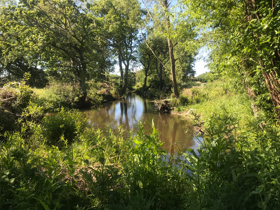 Haydons Pond May 2020
