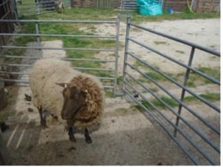 Peg Loom Weaving with Owena's Farm Therapies