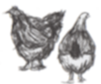 chickens-1.png