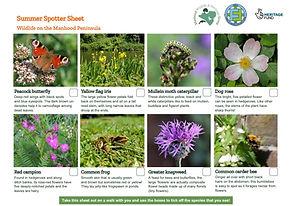 Wildlife Spotter Sheet Summer